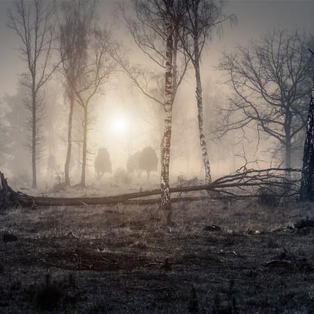 Gotland Viklau Dimma Vinter 2